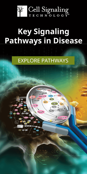CST Signaling Pathways & Diagrams