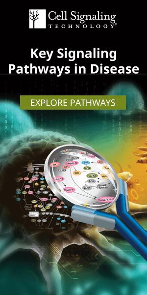 CST Signaling Pathways & Diagrams